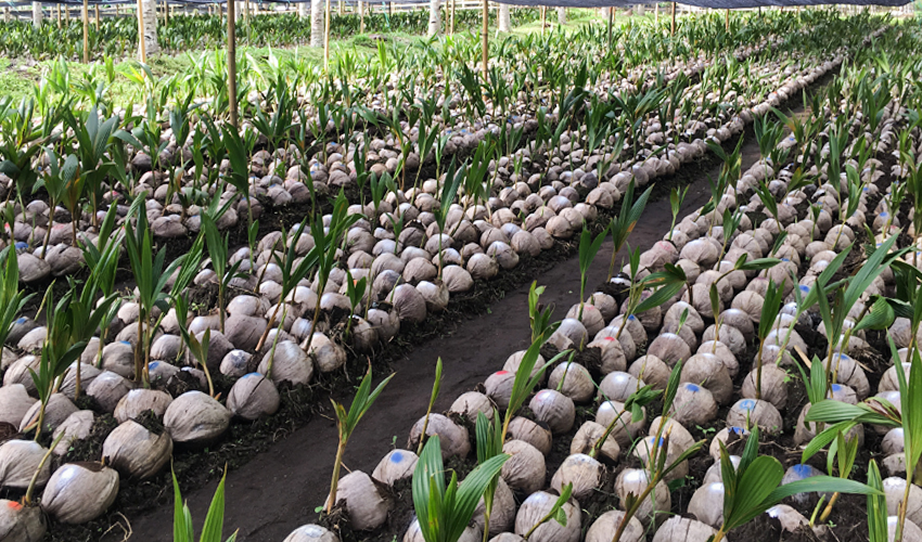 CKC - Food Security Zero Waste